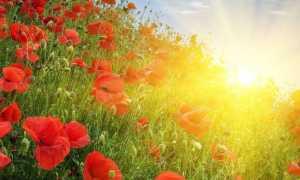 Побажання доброго ранку гарного дня