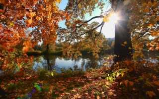 Пожелания доброго октябрьского утра стихи про утро в октябре