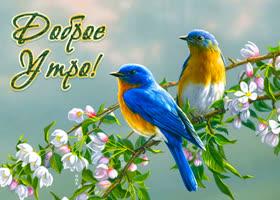 Пожелания доброго утра хорошего дня